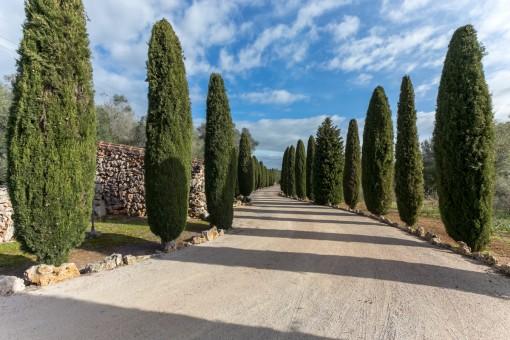 Schöne Zufahrt zur Finca