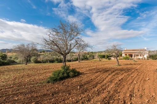 Grundstück von 5.000 qm