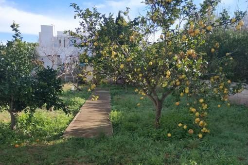 Tolles Grundstück in Calvia Dorf für ein Mehrfamilienhaus mit maximal 4 Wohneinheiten