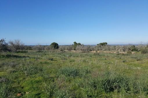 Exklusives Grundstück bei Colonia St. Jordi mit sehr schönem Weitblick