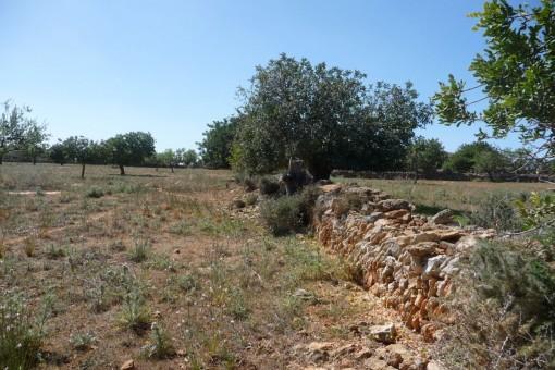 Sonniges Baugrundstück mit weitem Meerblick nahe der feinsandigen Strände Sa Nau und Cala Mitjana