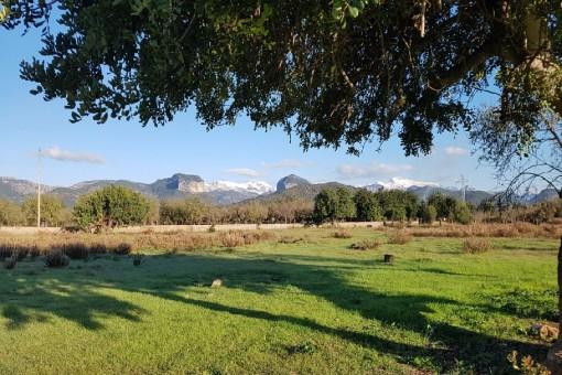 Tolles Grundstück mit Blick auf das Tramontana-Gebirge, fußläufig vom Dorf Consell