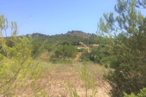 Von Natur umgebenes Baugrundstück im Küstenort Font de Sa Cala