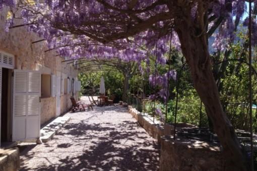 Mallorquinische Terrasse mit Pflanzen