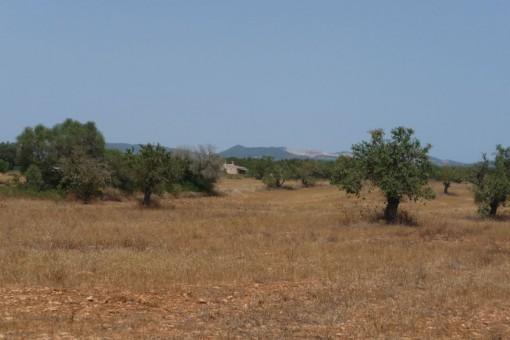 Wunderschönes Grundstück zwischen Campos und Santanyi in Sa Sorda