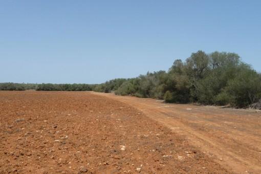 Fünf zusammenhängende Grundstücke für 5 Bauprojekte in Son Llado