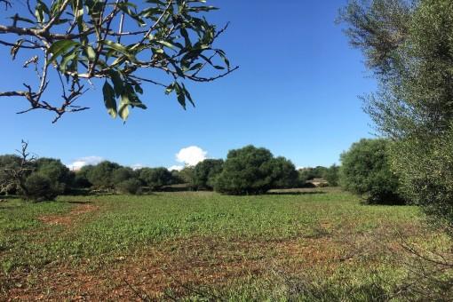Schönes, weitläufiges Grundstuck in ruhiger Lage nahe Santanyi