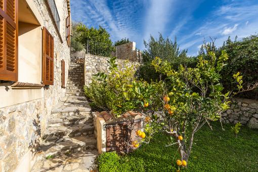 Idyllischer Garten mit Zitronenbäumen