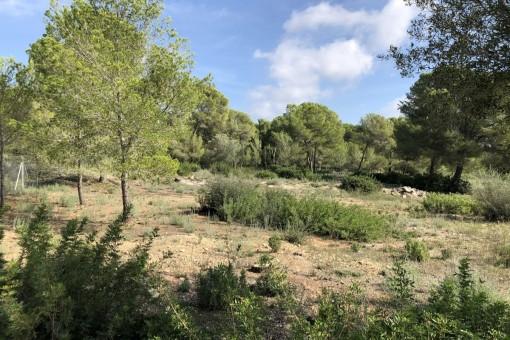 Grandioses Grundstück mit Genehmigung zum Bauen im schönen Nova Santa Ponsa