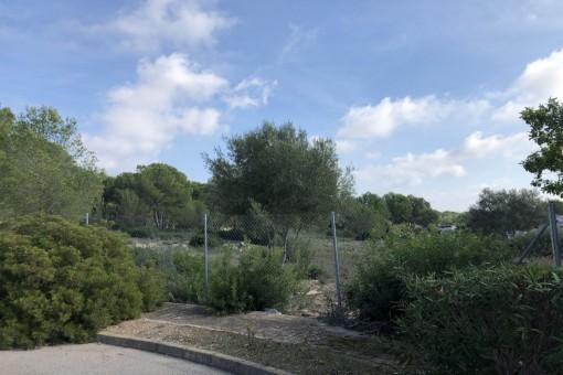 Sehr privates Grundstück im Herzen von Nova Santa Ponsa