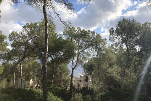 Meerblickgrundstück mit Baulizenz in bester Lage von Cala Vinyas