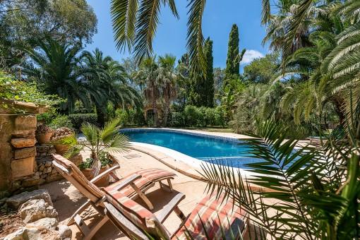 Traumhafter Poolbereich umgeben von Palmen