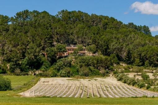Finca auf einem Hügel gelegen
