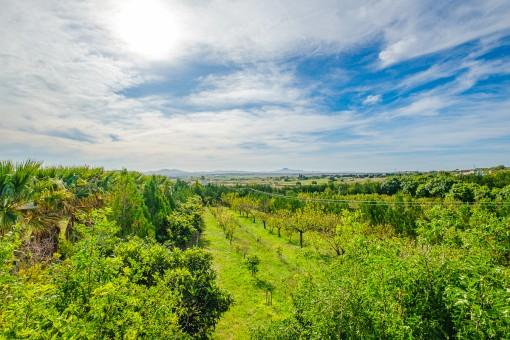 Traumhafter Blick über die grüne Umgebung