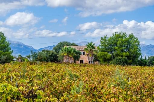 Finca inmitten von Weinreben