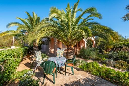 Mediterraner Garten mit Plamen