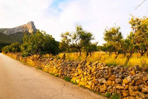 Wunderschönes Grundstück in bester Lage in Colonia de San Pere