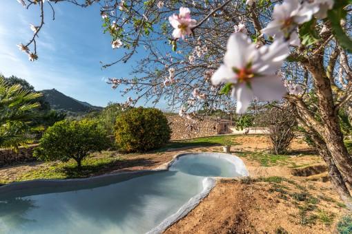 Garten mit Teich und Obstbäumen