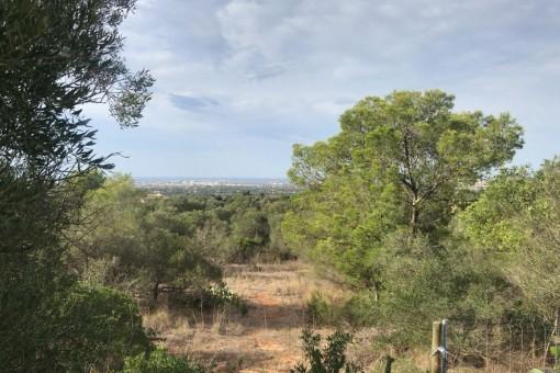 Großes Grundstück in ruhiger Lage in Sa Cabaneta