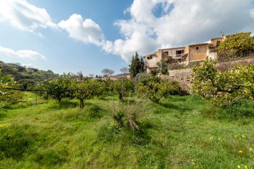 Dorfhaus zum Renovieren mit großem Obstgarten in Alaró