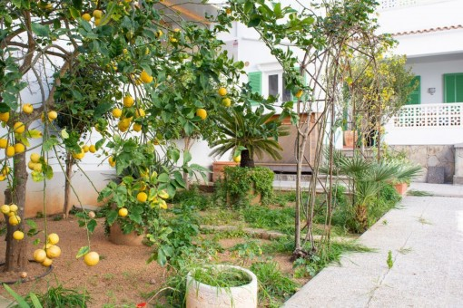 Garten mit Zitronenbäumen