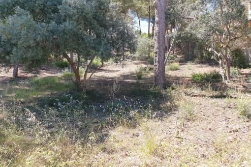 Tolles Grundstück neben dem Strand von Santa Ponsa