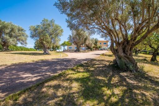 Zugang zum Haus mit Olivenbäumen