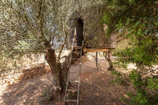 Garten mit vielen Olivenbäumen