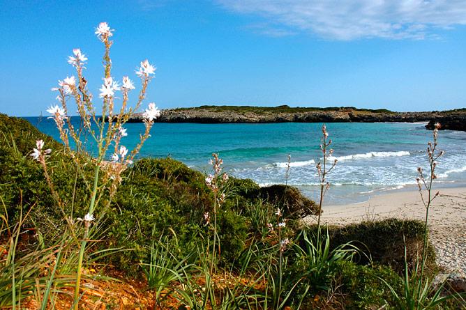 sandy beach Cales de Mallorca